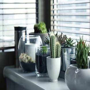 Evde Çiçek Bakımı Tiyoları