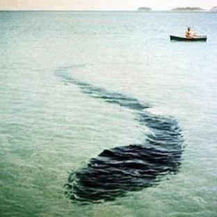 İnanılmaz Hook Island Deniz Canavarının Resimleri
