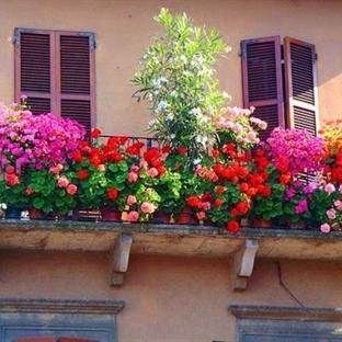Online Çiçek Siparişi Verebileceğiniz Siteler