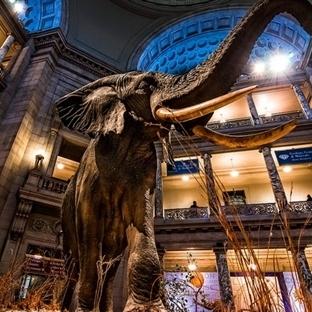 Washington DC'deki En İyi Müzeler