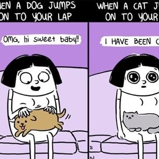 Dünya Kediler Günü'ne Özel Kedilerle İlgili Komikl