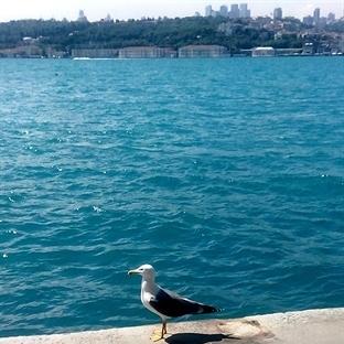 İstanbul'un Ruhu ve Gökyüzünü Çalan Betonlar