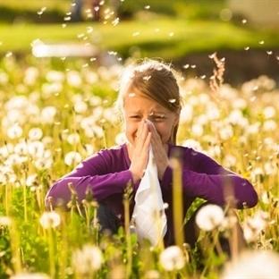 Bahar Alerjisi İçin Aşı Tedavisi