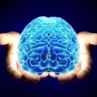 Beynin Büyüklüğü ile Zeka Arasında Bağlantı Varmı?