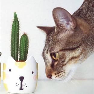 Evcil hayvanlar için güvenli 10 oda bitkisi