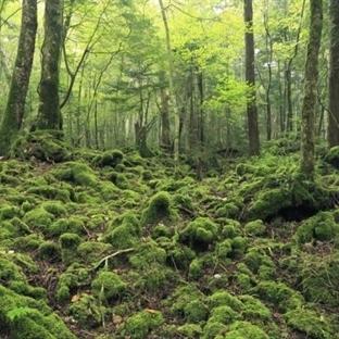 Japonya'da İntihar Ormanı