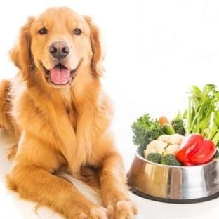 Köpek eğitimi ve bakımı