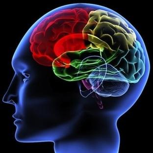 Renklerin Beyine ve Davranışlara Etkisi