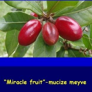 Acı ve ekşi tadı, tatlıya çeviren meyve: Miraculin