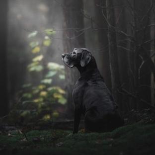 2018'in En İyi Köpek Fotoğrafları!
