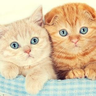 Kedi Tuvalet Eğitimi Nasıl Verilir