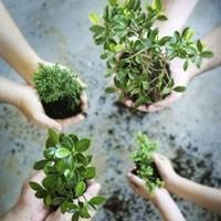 Her Bitkisel Ürün Güvenli Değildir
