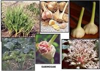 Hangi Hastalığa Hangi Bitki İyi Geliyor