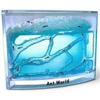 Karınca Evi Ant World