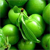 Yeşil Eriğin Faydaları Nelerdir?