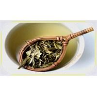 Beyaz Çay | Beyaz Çayın Faydaları
