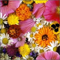 Kadınlar Çiçekleri Çok Mu Sever?