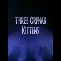 Üç Yetim Kedi Yavrusu