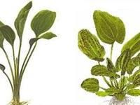Bitkiler Yaşam Kalitesini Artırıyor