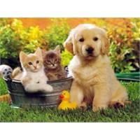 Büyük Tartışma: Kedi Mi Köpek Mi?