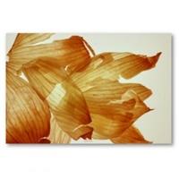 Şems Aslan Soğan Kabuğu İle Saç Toniği Yapımı