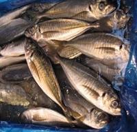 Taze Balık Seçmek İçin