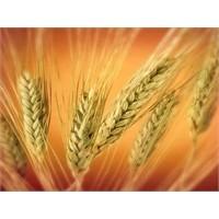 Buğdayın Faydaları !
