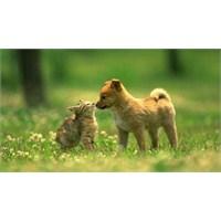 Evdeki Kedi Ve Köpeklerin Çocuklara Etkisi!