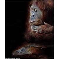 Yüzde 97 İnsan: Darwin'i Haklı Çıkaran Proje