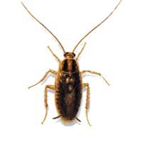 Böcekler Neden Ölünce Genelde Ters Dönüyorlar?