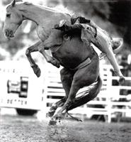 İnanılmaz Atlarla Rodeo Gösteri