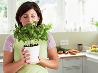 Akıllı Bitkilerle Zayıflamak Çok Kolay
