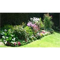 Bahçe Çiçekleri Bakımı