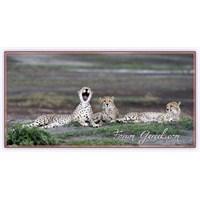 Serengeti'de Vahşi Yaşam