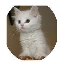 Yaşamınızdaki yeni bir yavru… kedi