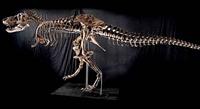 Satılık Tyrannosaurus Rex!