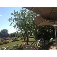 Arka Bahçede Ne Var? / Backyard Bebeköy
