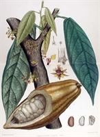 Kakao Yağı Çatlakları Önlüyor