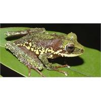 Papua Yeni Gine'de 200 yeni canlı türü bulundu