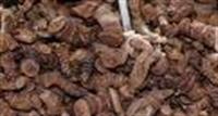 Çin Zencefilinin Faydaları
