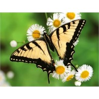 Kelebek Hassaslığında Öylesine Bir Hayat Hikayesi