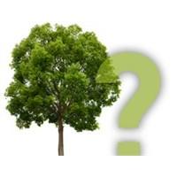 Ağaçlar Karakterinizi Anlatıyor