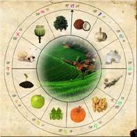 Astrolojide Bitki Şifacılığı Ve Önümüzdeki Yıllar