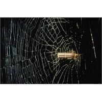Örümcek Ağının Şaşırtıcı Özellikleri