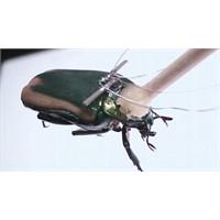 Teknoloji Böcekle Birleşti
