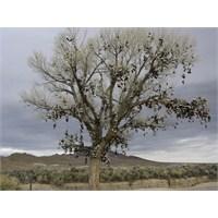 Antakyanıntavuk Başlı Ve Ayaklı Dilek Ağaçları ...