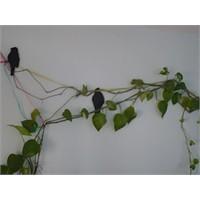 Duvardaki Kuşlar