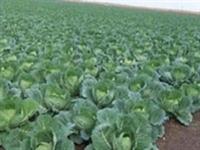 İzmirde Organik Tarım Atağı