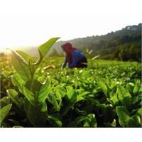 Tarım Sektörü, 18. Dünya Organik Kongresi'nde!