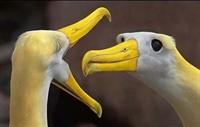 Birbirinden Komik Ve İlginç Hayvan Resimleri